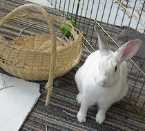 rabbit in cage with basket